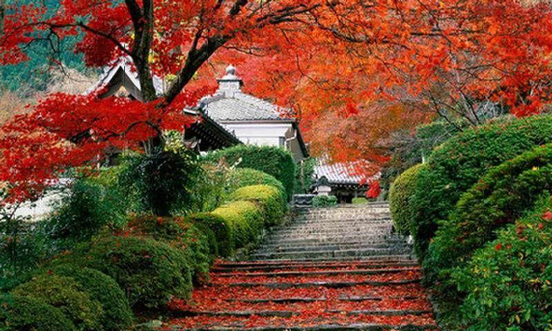 Korean Gardens Kore Bahceleri