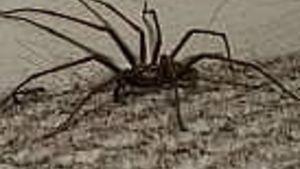 c40a4f48dc09a3d641e74d6cb3aba8dc - How To Get Rid Of Spiders In Side Mirror