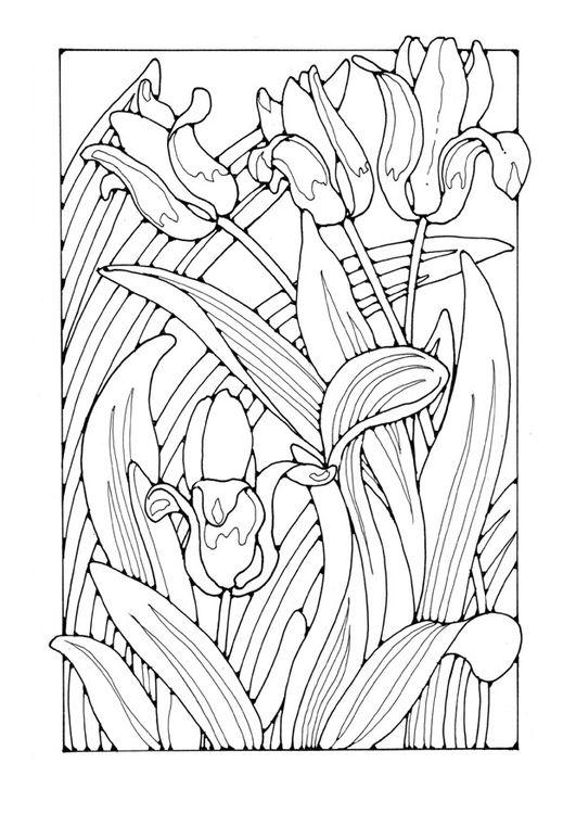 Malvorlage Tulpen Flower Coloring Pinterest Ausmalen