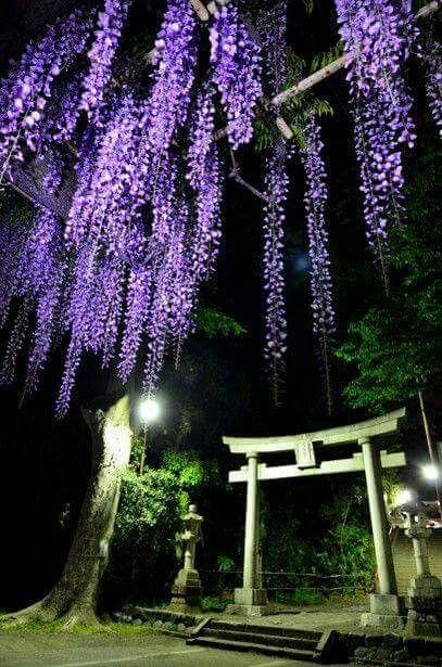 Magic-night -spiritual-japan-mistic-flowers violet
