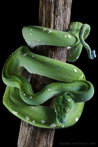 Thumbnail 46 Beautiful Snakes Snake Lovers Cute Snake