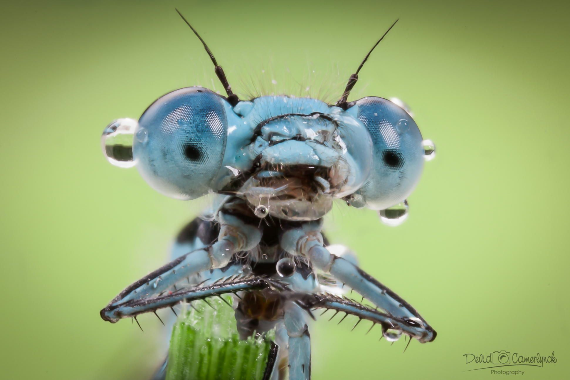 dropface  by Devid Camerlynck on 500px