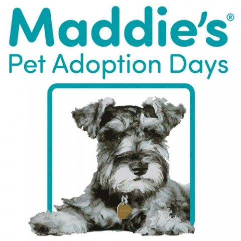 Maddie's Pet Adoption Days Pet adoption, Adoption day