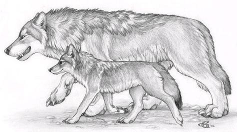 Pin von Hulda Valdís Önundardóttir auf Buck | Pinterest | Wolf