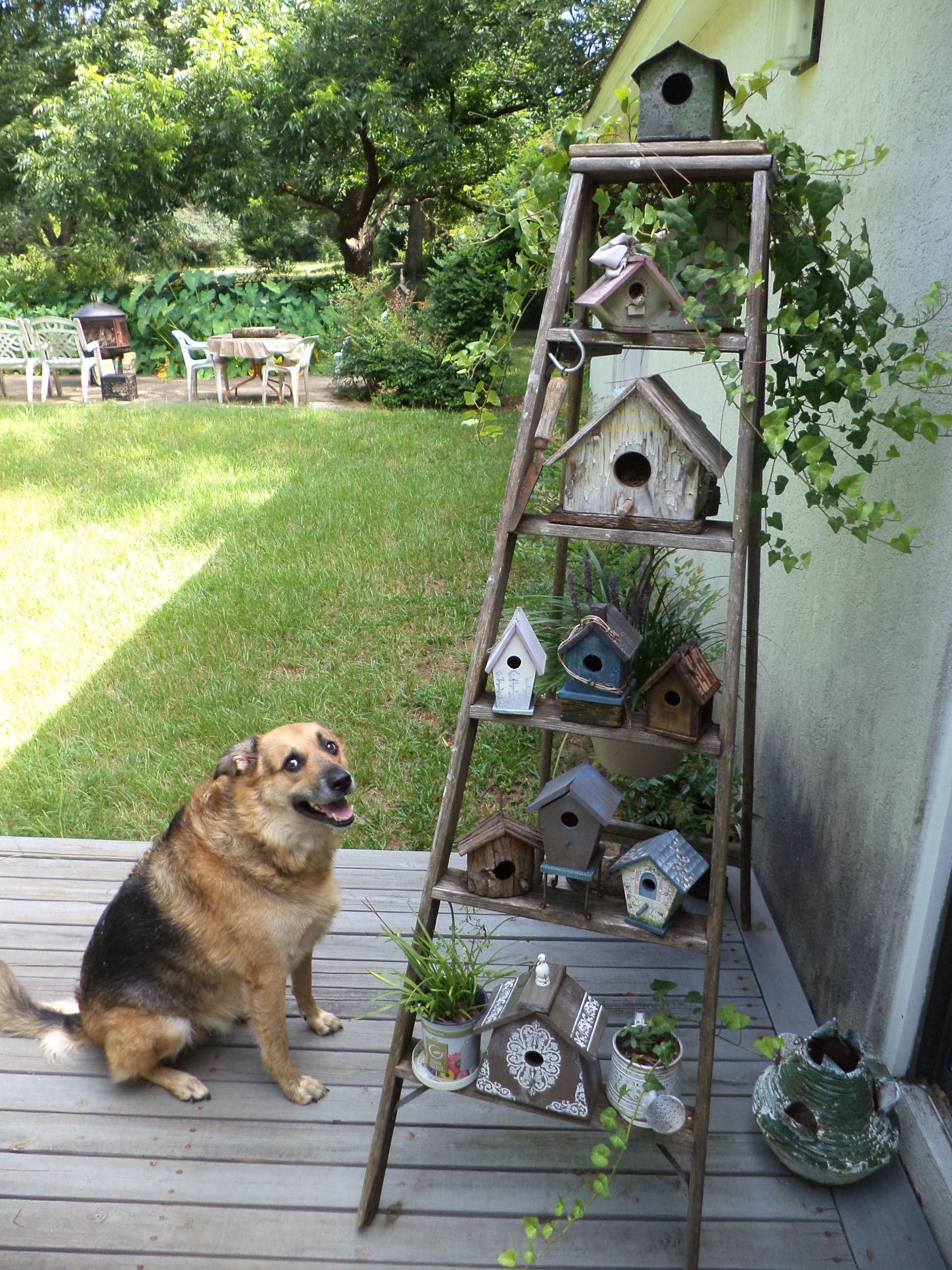 New birdhouses on daddyus old ladder ladders pinterest