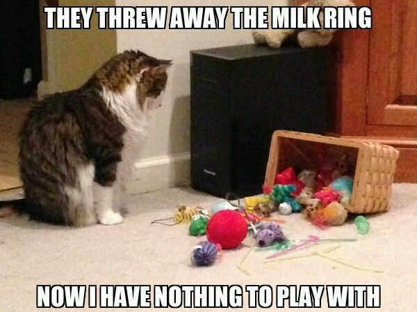 Image result for cat with toys meme