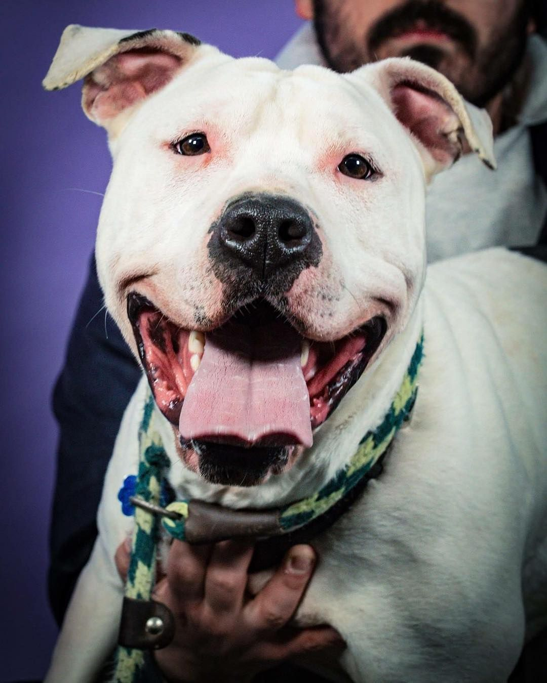 This 3 Year Old Charmer Is An Energetic Bouncy Girl Who Willingly Shares Toys And Bones Whenever Asked She S Comfy Wit Dog Adoption American Bulldog Mix Dogs