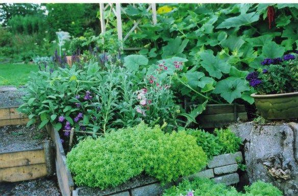Att Planera En Kokstradgard Gardening Garden Sloped Garden