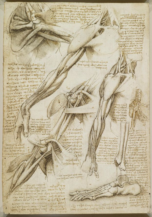 A Rare Glimpse of Leonardo da Vinci\'s Anatomical Drawings   Anatomía ...