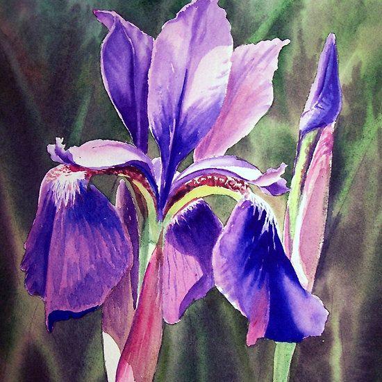 Purple Iris Flower http://www.redbubble.com/people/irinasztukowski/works/15840408-purple-iris-flower #purple #purpleart #purpleflower #iris #purpleirisPurple Iris Flower