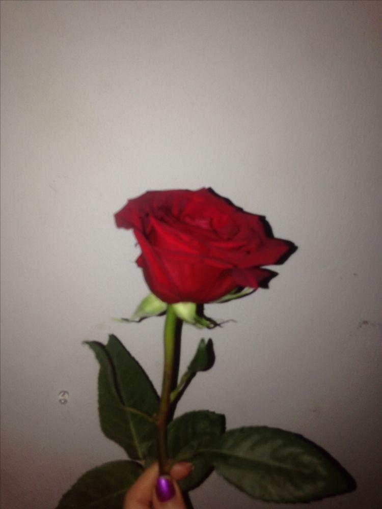 ���ᎪᏙᏆᏚ ���ᎾᏚᎬ Wallpapers Pinterest Rose Flowers And
