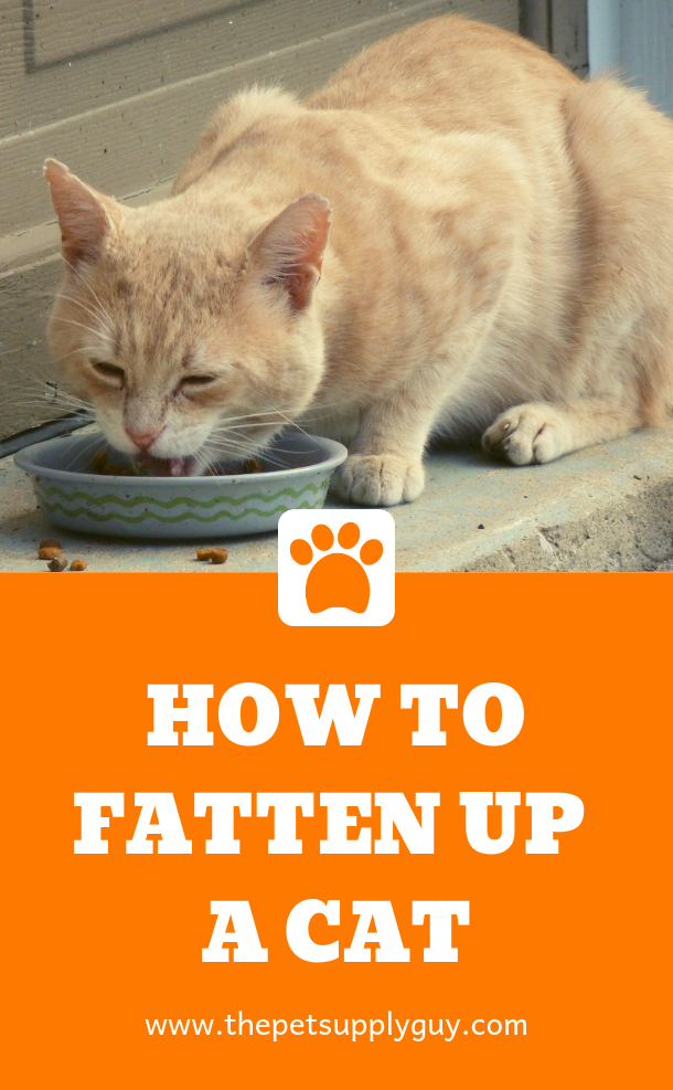 How to Fatten Up a Skinny Cat (With images) Cats, Cat