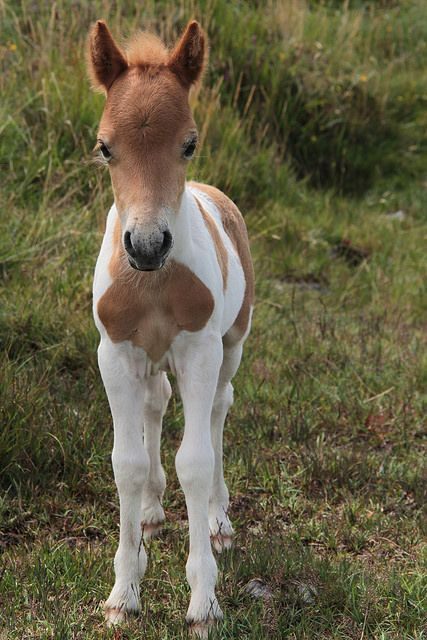 cute baby foals - photo #13