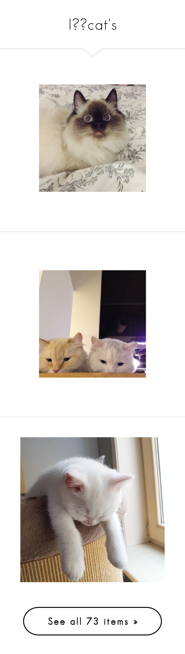 """""""I❤️cat's"""" by siennahaw ❤ liked on Polyvore featuring pictures - brown, photo, filler photos, pictures - beige, animals, pictures, backgrounds, images, aesthetic and cats"""