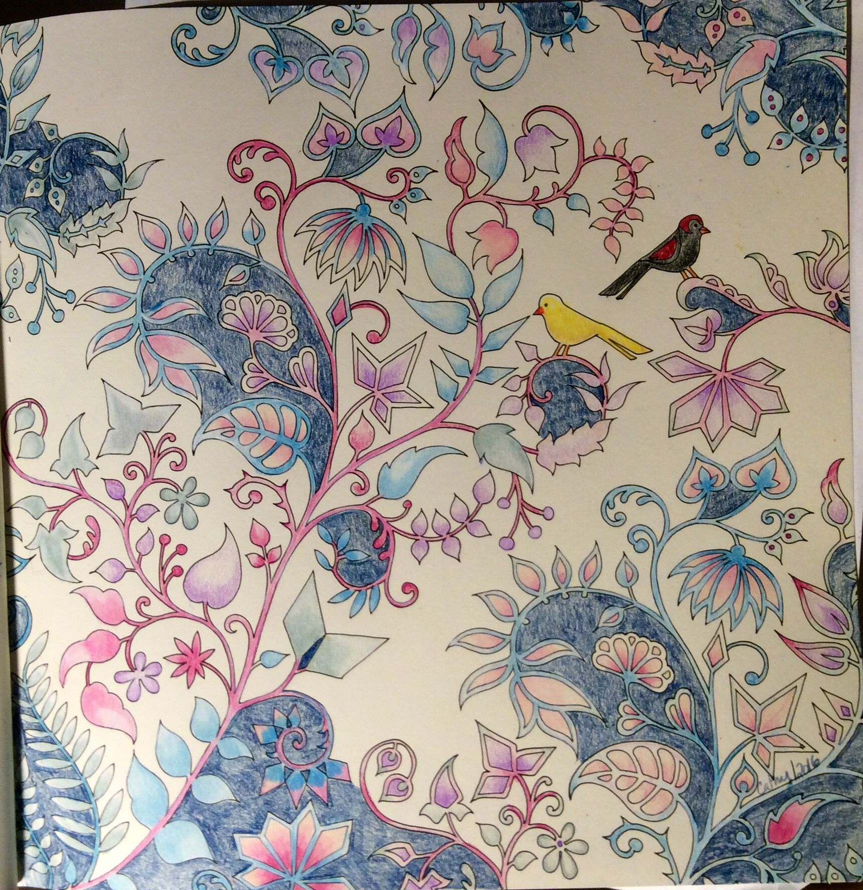 Two Birds On Flowering Vines Enchanted Forest Johanna Basford Cathyc Pencil Crayons Coloring BooksAdult