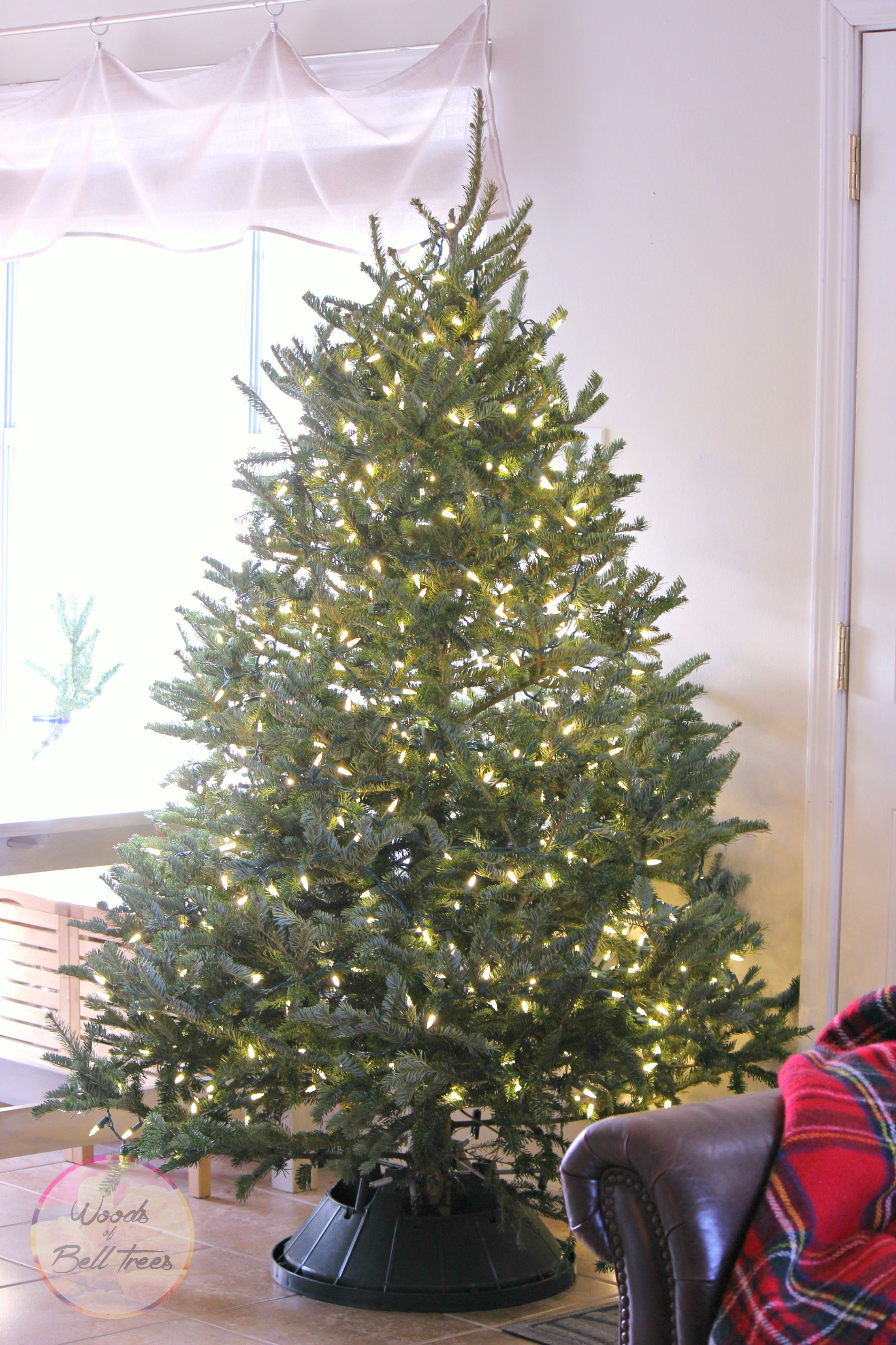 The scent of a Christmas tree brings back memories of holidays past.