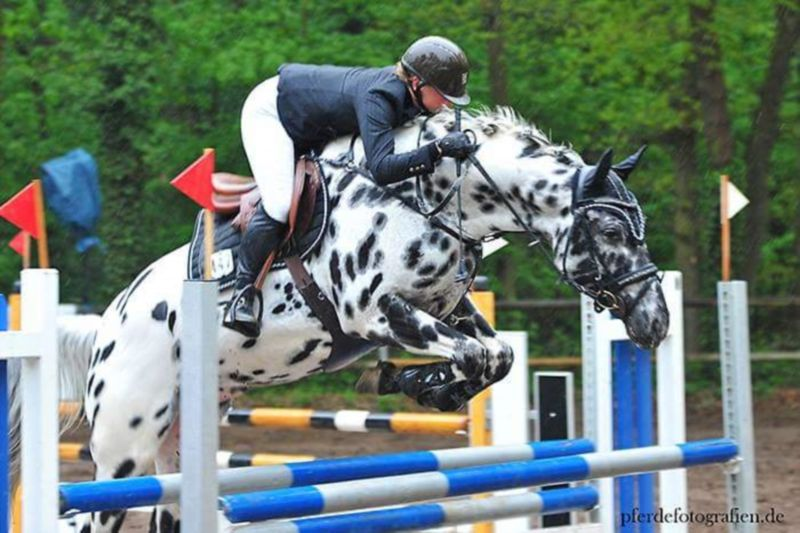 springreiten turnier ausmalbilder pferde  bibi  tina 2
