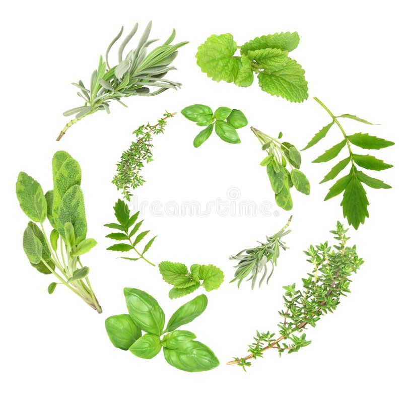 Herb Garlands. Of basil, variegated sage, lavender, lemon balm, valerian (valliu ,