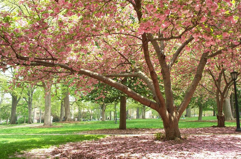 Nc Flowering Tree Designs For The New House Pinterest