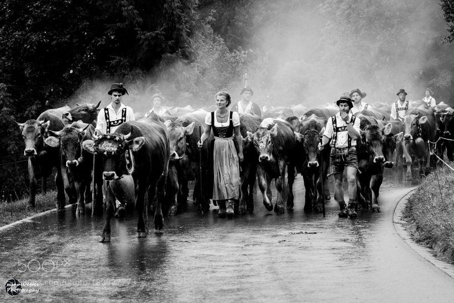 Popular on 500px : Viehscheid by minusdegree