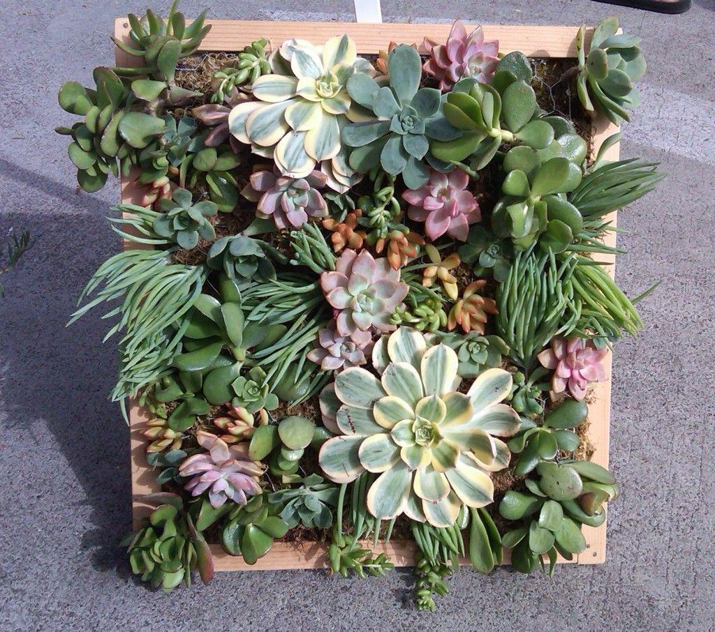Small, Framed Succulent Art...fantastic! Vertical Succulent GardensSucculent  ...