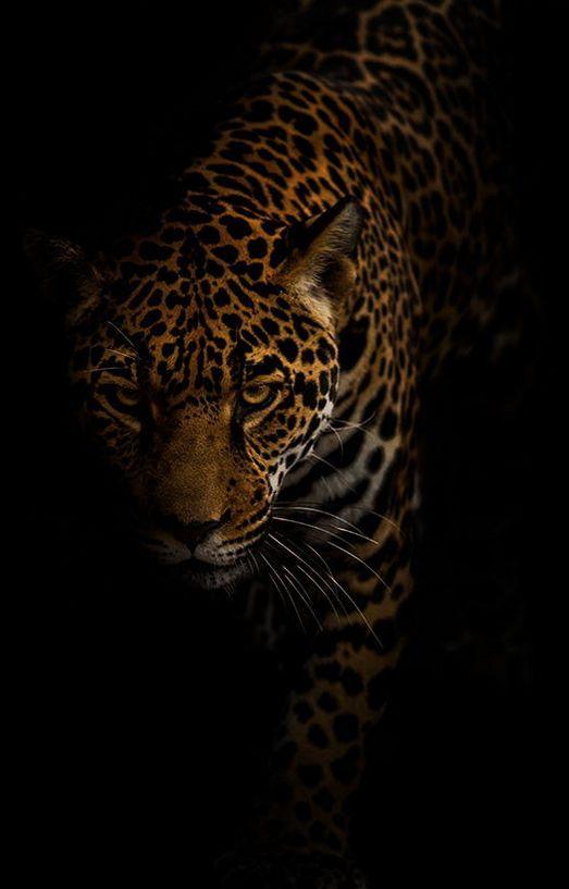 Jaguar by Jonathan Truong amazing car picture # # #amazingcars