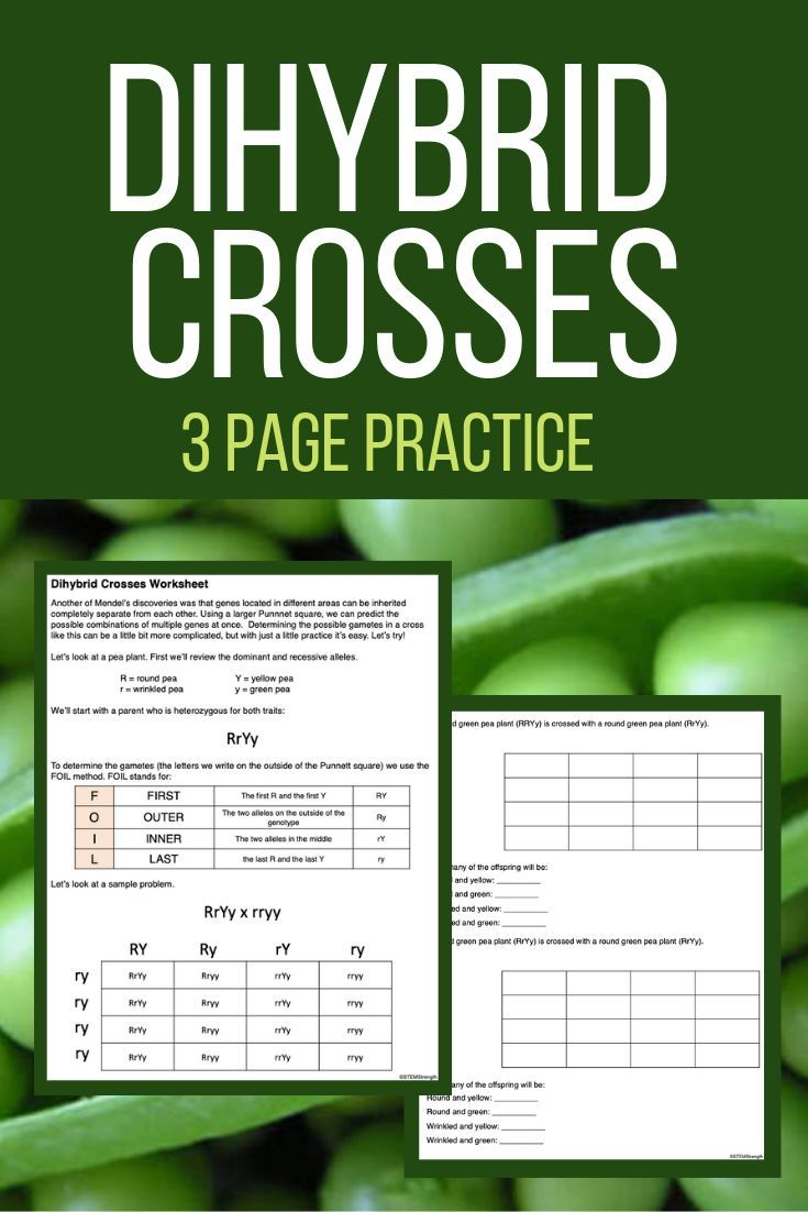 Dihybrid Crosses - Practice Worksheet | Teaching science ...