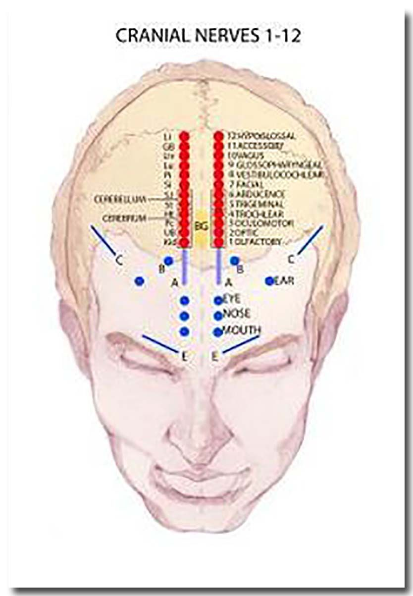 Excellent Advice About Acupuncture That You Will Want To Read Acupressure Treatment Acupuncture Acupressure
