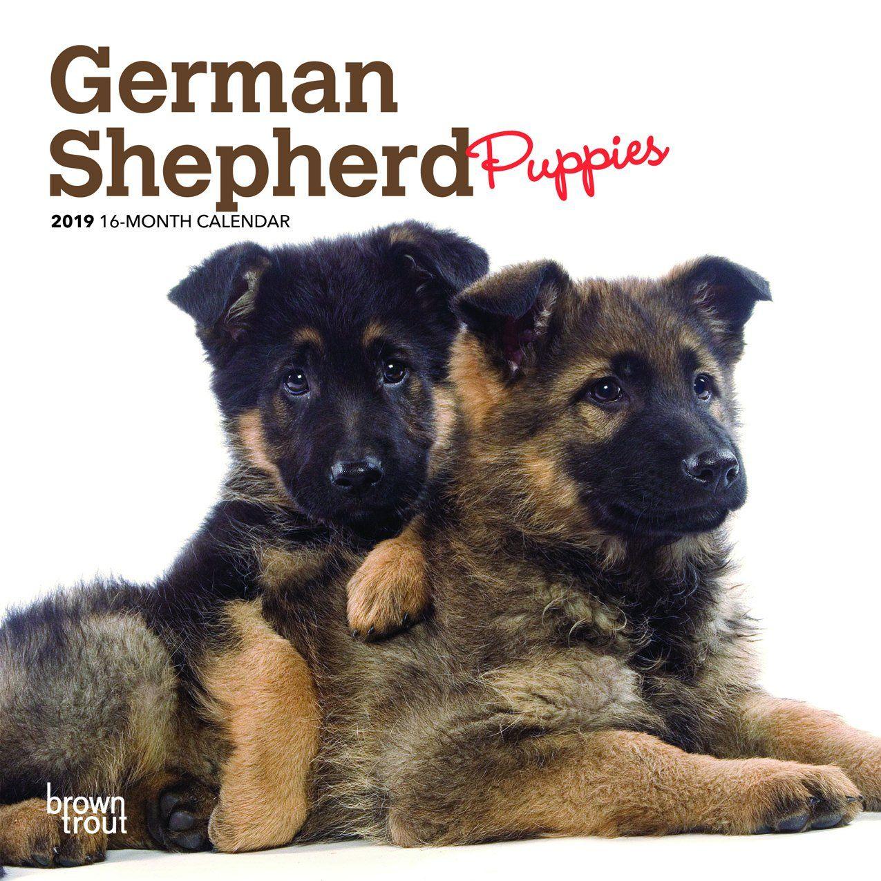 German shepherd puppies 2019 mini wall calendar german