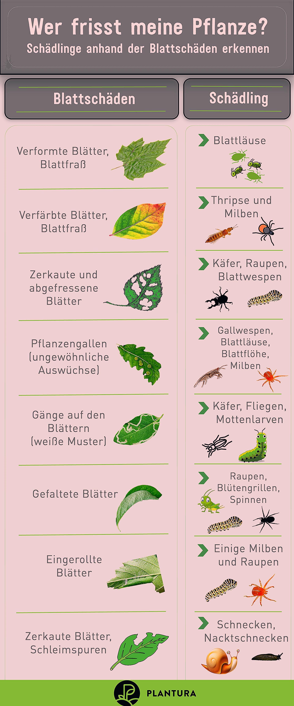 Photo of 10 Hausmittel gegen Schädlinge im Garten – Plantura