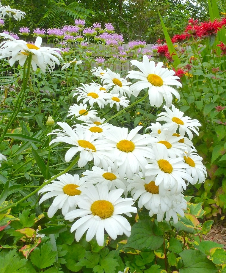 Pin On Plants Black White Garden