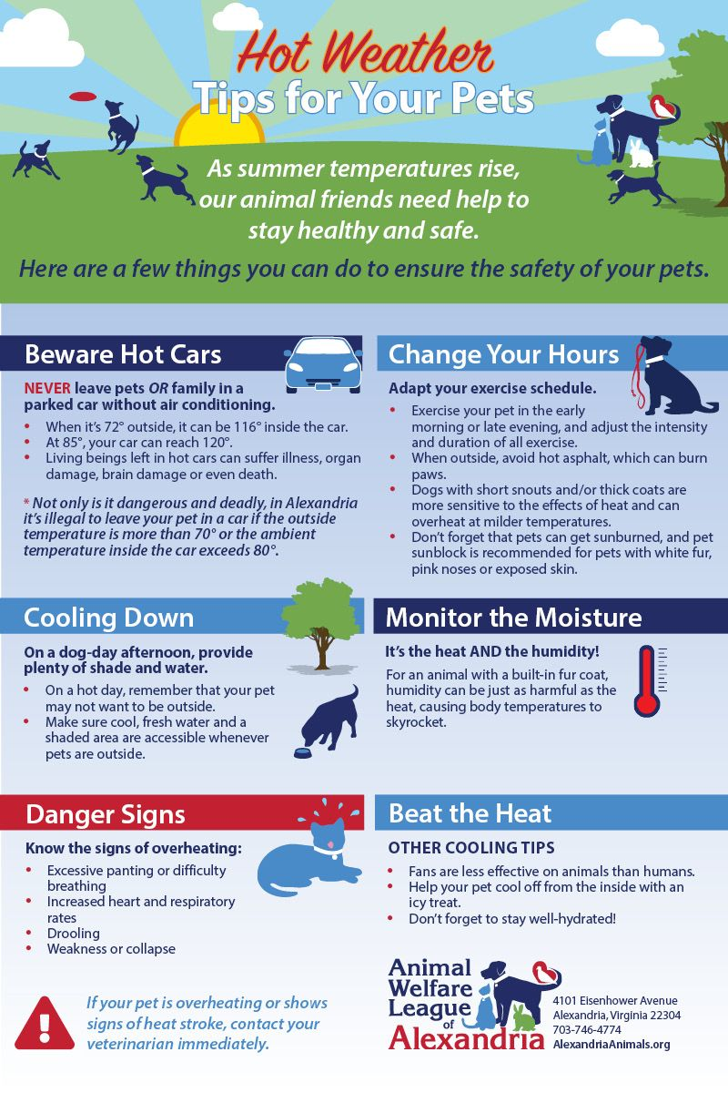 Here Are A Few Tips To Help Make Sure All Of Your Family Members Pets Included Are Staying Safe While Enjoying The Sum How To Stay Healthy Pets Hot Weather