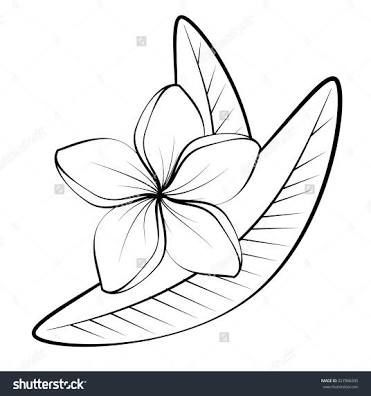 Image Result For Frangipani Line Drawing Flower Drawing Flower Tattoo Drawings Tropical Flower Tattoos