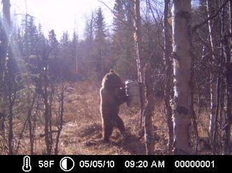Testimony - Bait Em 907 Alaska's Bear Bait and Moose Lure Company (907) 373 8995