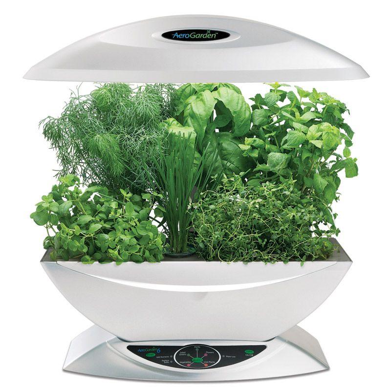 The aerogarden is an indoor hydroponic garden looks very for Indoor gardening hydroponics
