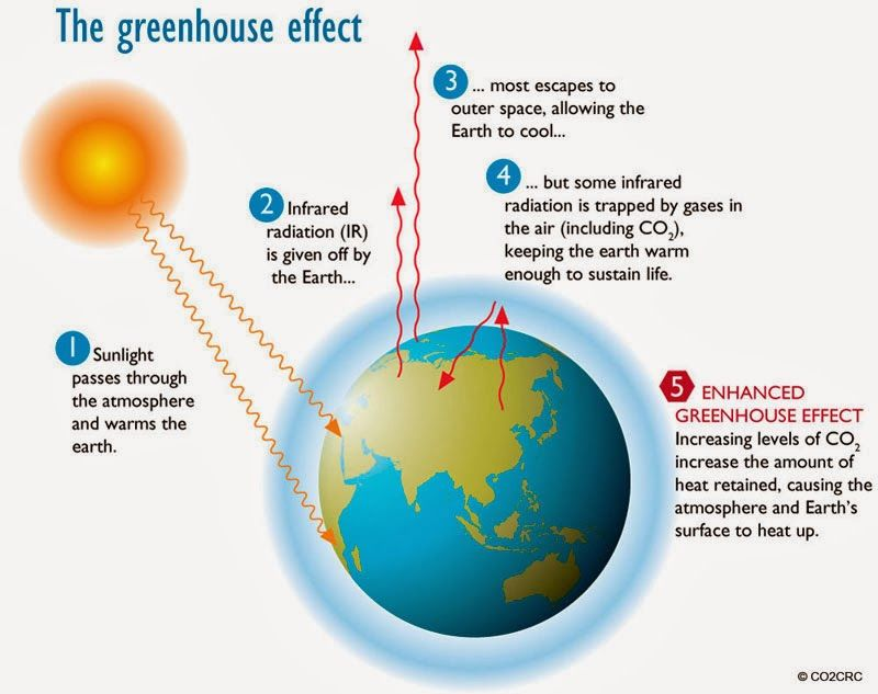The Green House Effect Affects Us All Respond Now With