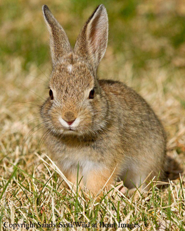Pretty Bunny.