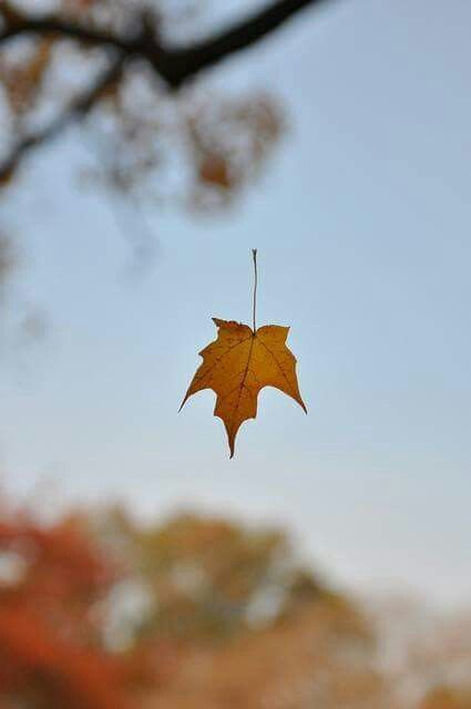 Image result for a leaf in amber Pinterest