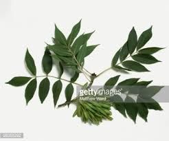 Image result for tree leaves