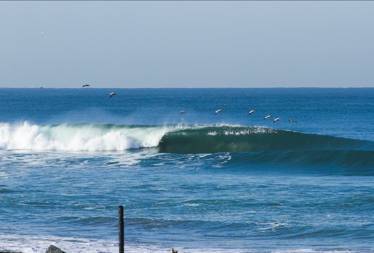 Cassurf Gulls Lead The Way At Los Frailes On The Sea Of Cortez Baja California Sur Surfing Surf Forecast Surfing Photos