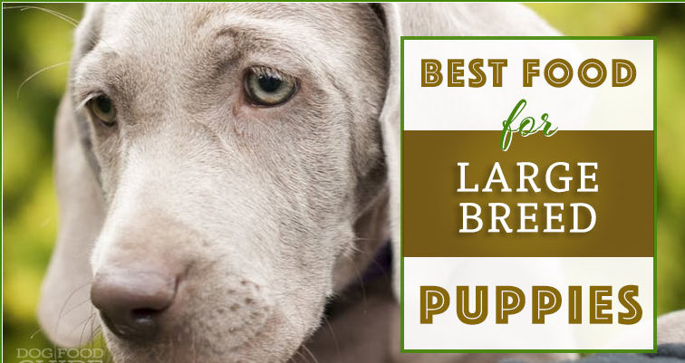 10 Best Large Breed Puppy Foods Review Large breed puppy