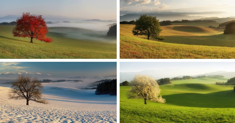 Photographer Captures Magical Photos Of The Same Cherry Tree In Four Different Seasons Cherry Tree Landscape How To Take Photos