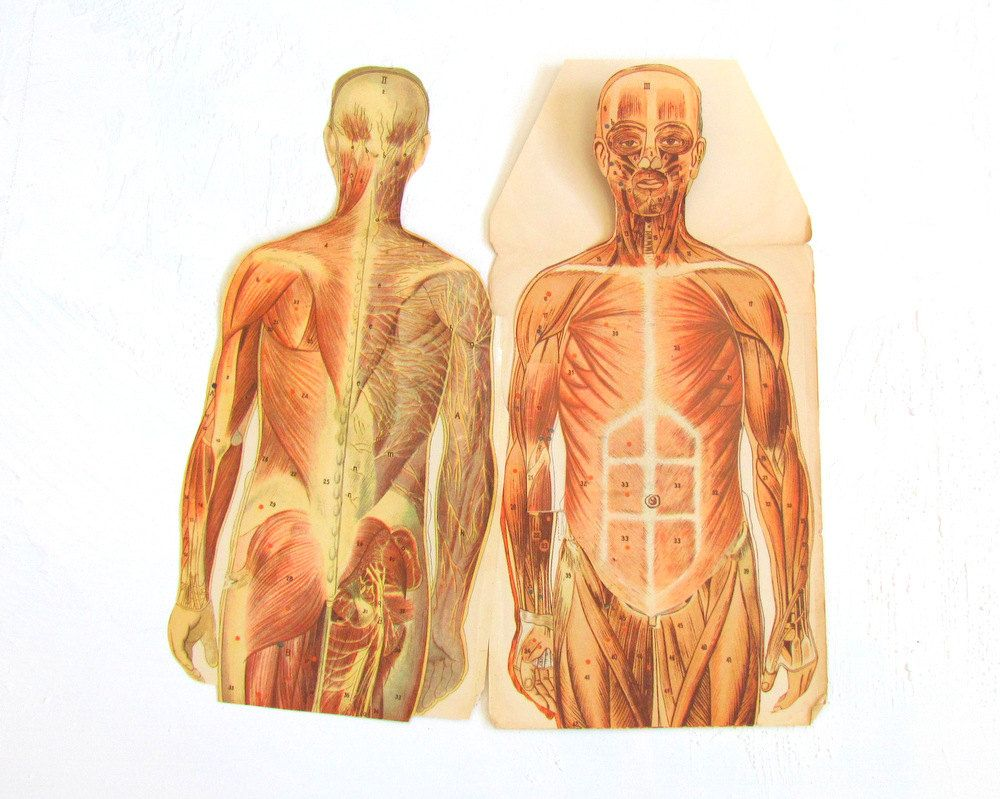 Antique Human Anatomy Male Fold Out Medical Chart 1930s Medical ...