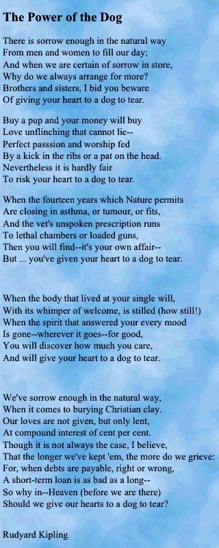 give your heart to a dog to tear