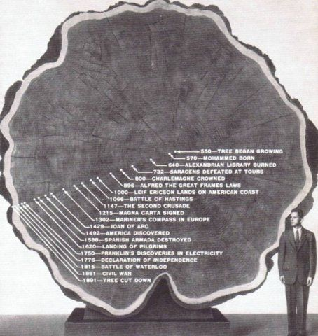 Lifespan of a Tree #sciencehistory
