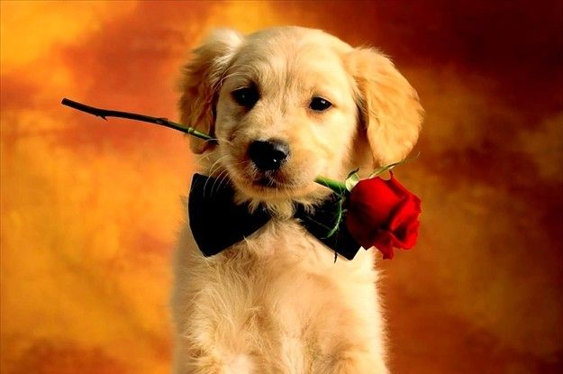 8 Animals You Should Be Cuddling This Valentine S Day Cute Animals Images Cute Animal Pictures Animals Baby and dogs hd desktop wallpapers