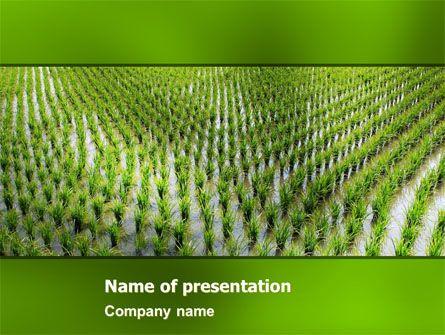 Httppptstarpowerpointtemplaterice paddies rice httppptstarpowerpointtemplaterice toneelgroepblik Gallery
