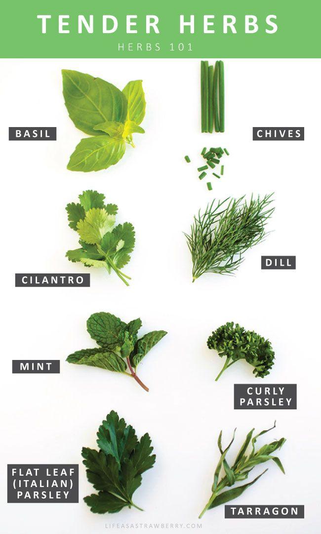 Fresh Herbs 101   Ca