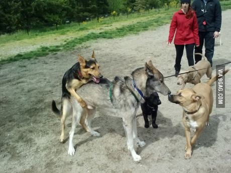 Went To The Dog Park Someone Brought A Wolf Dogs Dog Park