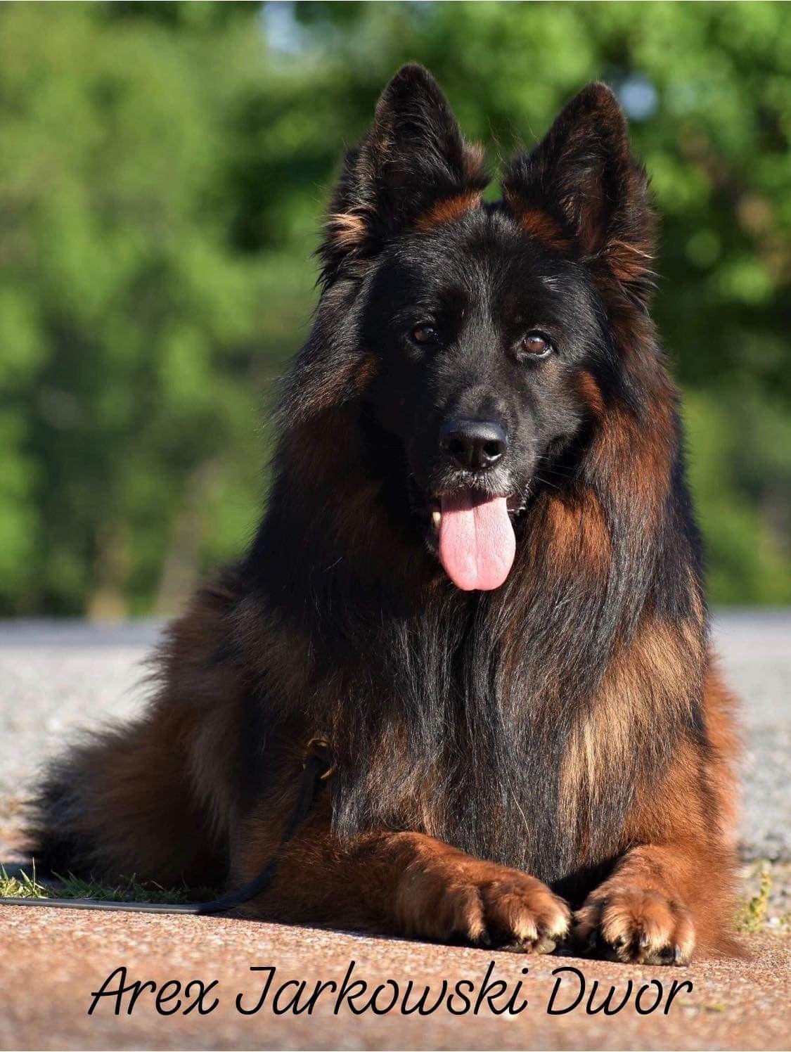 Pin by on Pets German Shepherds